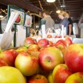 Green Mountain Orchard Bushels of Apples