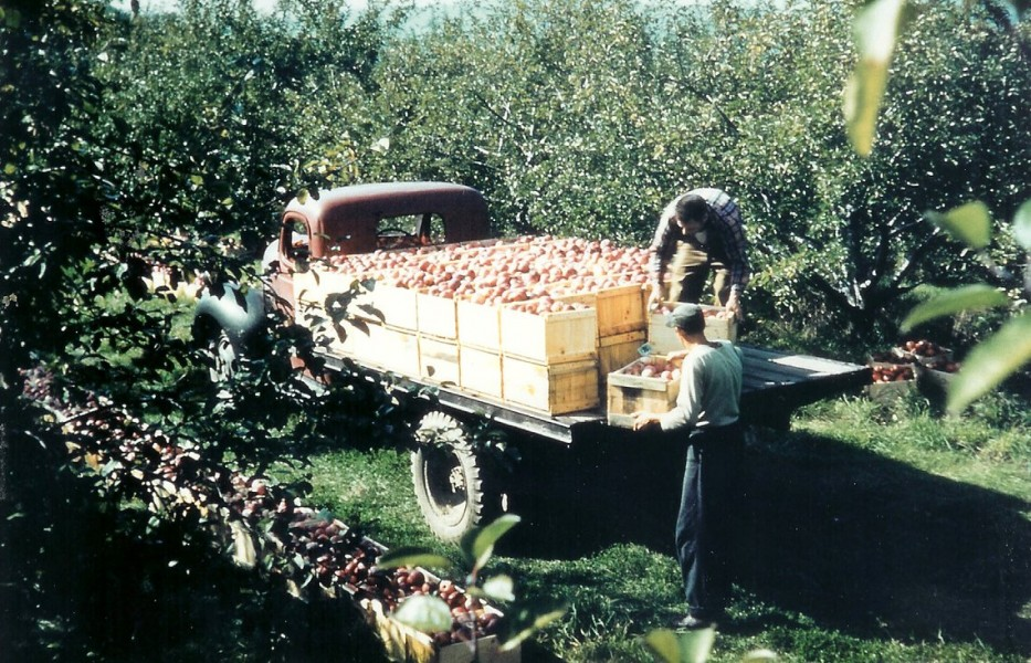 green mountain orchards old time picking