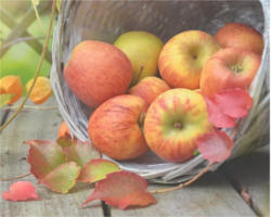 Oct_apples