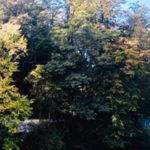 09/09/19 - Foliage near Red Clover Inn by Vicky Tebbetts