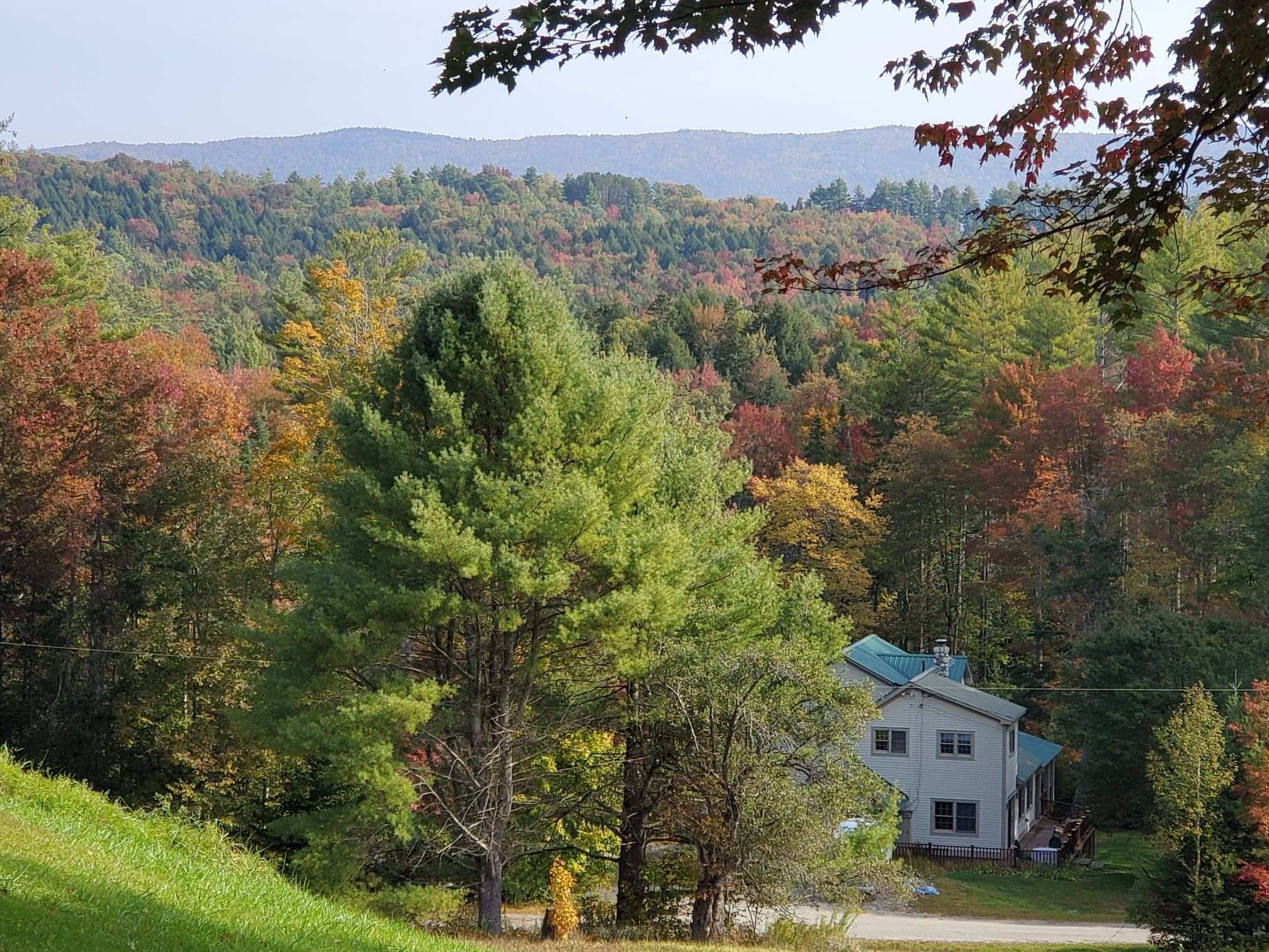 Foliage in Londonderry, VT by Renee-Marie Smith